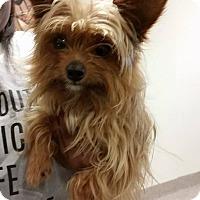 Adopt A Pet :: BoBo - Gainesville, FL