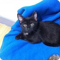Adopt A Pet :: Jasmine - Watkinsville, GA