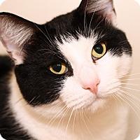 Adopt A Pet :: SALEM - Royal Oak, MI