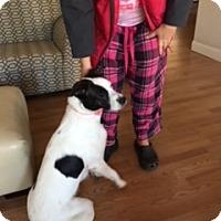 Adopt A Pet :: Evey - Alpharetta, GA