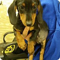 Adopt A Pet :: Bailey - Berkeley Heights, NJ