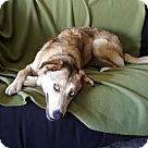 Adopt A Pet :: Hailey - ADOPTION PENDING!!