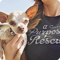 Adopt A Pet :: Grandpa Memphis Skinnyspine - Los Angeles, CA