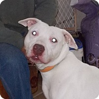 Adopt A Pet :: Hennessy - Middletown, NY
