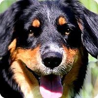 Adopt A Pet :: SARA(OUR