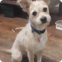 Adopt A Pet :: Grettal in San Antonio - Austin, TX