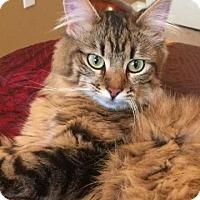 Adopt A Pet :: Royal - Crocker, MO