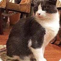 Adopt A Pet :: Victoria - Metairie, LA