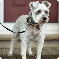 Adopt A Pet :: Charlie NY - Millersville, MD