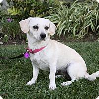 Adopt A Pet :: CHERYL - Newport Beach, CA