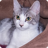 Adopt A Pet :: Gracie - Elmwood Park, NJ