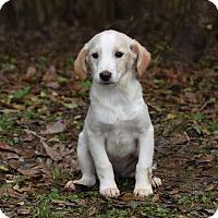 Adopt A Pet :: BobbiJo - Groton, MA