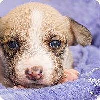 Adopt A Pet :: RUMOR - Inland Empire, CA