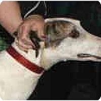 Adopt A Pet :: Trey (