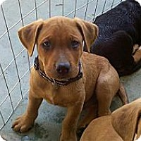Adopt A Pet :: Fred - Bakersfield, CA