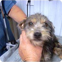 Adopt A Pet :: Lucy - Irvington, KY