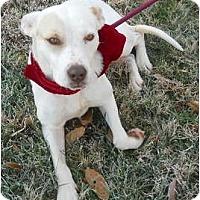Adopt A Pet :: Nikki - PENDING! - kennebunkport, ME
