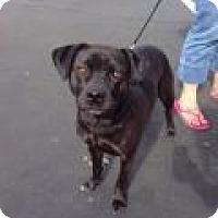 Adopt A Pet :: JONESY - Gilbert, AZ