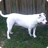 Adopt A Pet :: Divinity - Cranston, RI