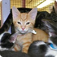 Adopt A Pet :: Ranger - Dover, OH