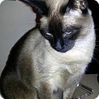 Adopt A Pet :: KitCat - Gilbert, AZ