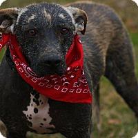 Adopt A Pet :: Charlotte - Cranford, NJ