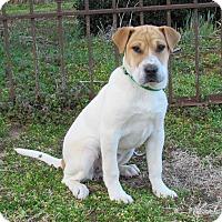 Adopt A Pet :: DOTTIE - Hartford, CT
