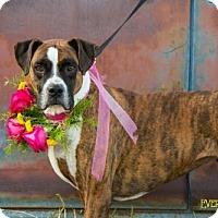 Adopt A Pet :: Haven - Salt Lake City, UT