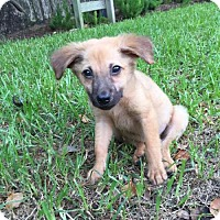 Adopt A Pet :: August - Houston, TX