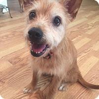 Adopt A Pet :: Dixie! - Vacaville, CA