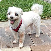 Adopt A Pet :: Cecil - Boca Raton, FL