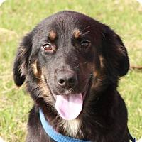 Adopt A Pet :: Tammy - Conesus, NY