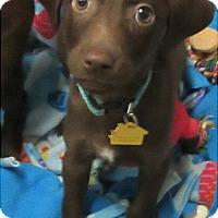 Adopt A Pet :: Laney - Glenwood, MN