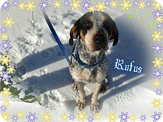 Bluetick Coonhound Mix Dog for adoption in Buffalo, Indiana - Rufus is ADOPTED!