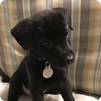 Adopt A Pet :: Jane - Huntsville, AL