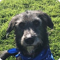 Adopt A Pet :: Kurtis - Chico, CA