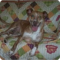 Adopt A Pet :: Seth - No Fence Required - Antioch, IL