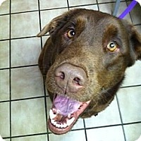 Adopt A Pet :: Nook - Foster, RI