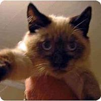 Adopt A Pet :: Xavier - Davis, CA