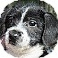 Adopt A Pet :: Samantha - Brattleboro, VT