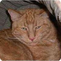 Adopt A Pet :: Fitz - Lombard, IL
