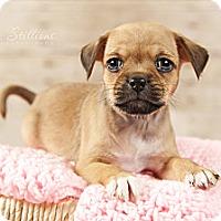 Adopt A Pet :: Mamie - Wytheville, VA