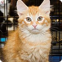 Adopt A Pet :: Colin - Irvine, CA