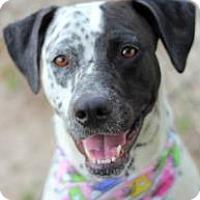 Adopt A Pet :: Dottie - Tampa, FL