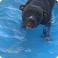 Adopt A Pet :: Rufus - Las Vegas, NV