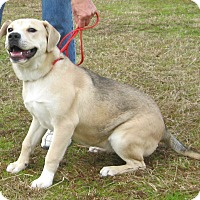 Adopt A Pet :: Sophie - Manning, SC