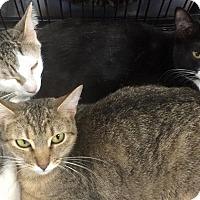 Adopt A Pet :: Bogie, Judy and Cyd - Harrisburg, NC