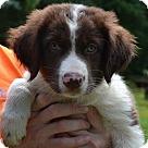 Adopt A Pet :: Prescott