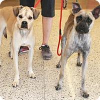 Adopt A Pet :: Max & Sadie - Gilbert, AZ