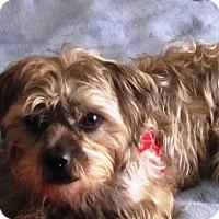 Adopt A Pet :: HERBIE - Eden Prairie, MN